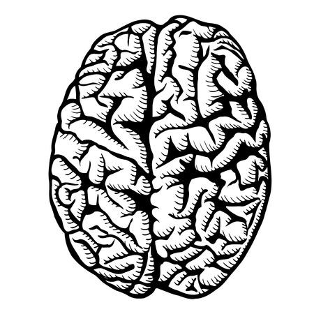 Human brain vector illustration Isolated on white Illustration