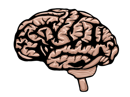 thalamus: Cartoon brain isolated on a white background. Vector illustration of the human body