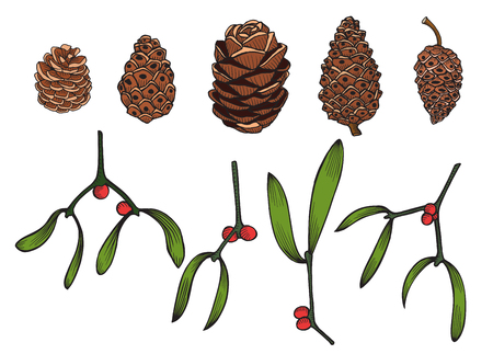 chrismas card: Set of Hand drawn Pine cone and a mistletoe plant, vector illustration isolated on white Illustration