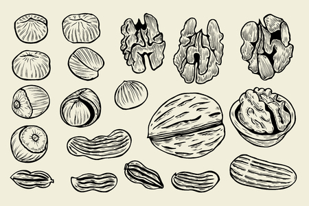 Great collection of highly detailed hand drawn nuts. Isolated on beige. Vector illustration Illustration