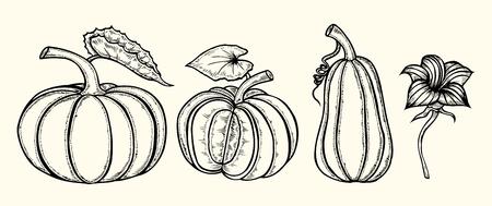 Set di zucca disegnata a mano. Illustrazione vettoriale su sfondo bianco Archivio Fotografico - 88027999