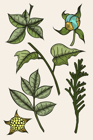 arboles frondosos: Colored set of plants painted by hand, a branch of spruce or tuja, leafy branches and flowers Vectores