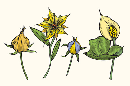 Set of flowers Vintage botanical hand drawn illustration of briar flowers, buds, berries and leaves. Vector engraved color natural elements. Sketch style.