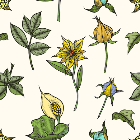 Vector vintage seamless floral pattern. Herbs and wild flowers. Botanical Illustration engraving style. Colorful Ilustracja
