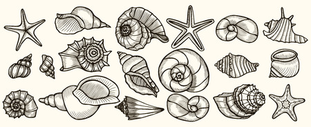 Seashells vector set. Hand drawn illustrations of engraved line. Collection of realistic sketches various mollusk sea shells different forms.