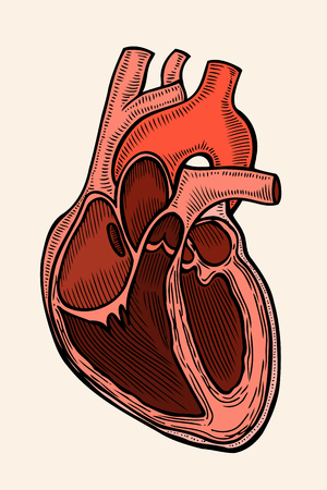 Heart in retro engraving style illustration. Illustration