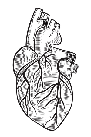Human heart vintage illustrations. Vector hand drawn Isolated on white