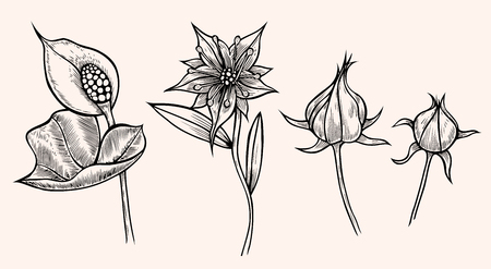 Set of flower isolated on peach background, botanical hand drawn doodle sketch marigold, vector illustration for design package tea, cosmetic, natural medicine, greeting card, wedding invitation Illustration