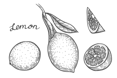 Lemon set Hand drawn. Isolated on white background. vector illustration. Retro engraving style. 向量圖像