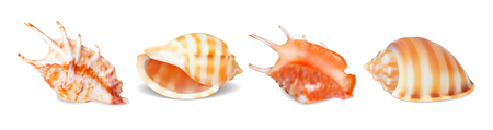 Set of vector illustrations seashells of various kinds in realistic style isolated on white background. Illustration