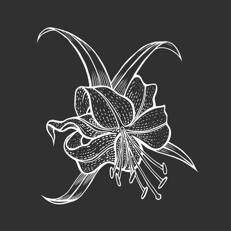vintage floral illustration lily Isolated on black Illustration