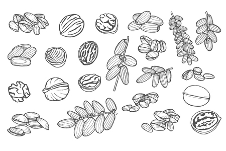 Great collection of highly detailed hand drawn dates, pistachios, walnuts. Isolated on white. Vector illustration.