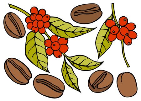 Ramo di caffè con foglie e bacche. Stile schizzo disegnato a mano. Illustrazione vettoriale di colore vintage per etichetta, web.