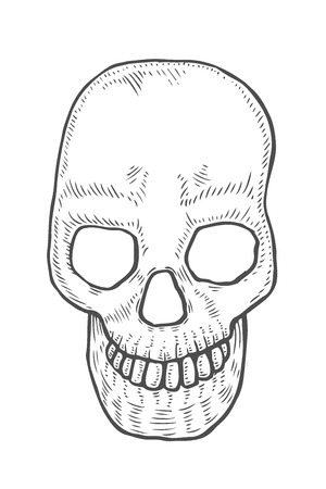 Skeleton of the human head skull, vintage engraved illustration.