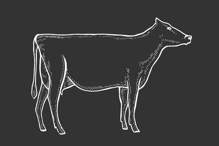 black and white engrave isolated vector cow