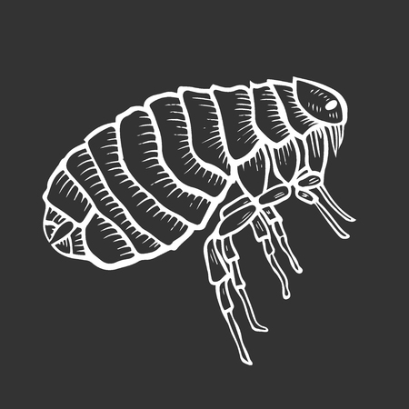 Flea insect parasite engraving vector illustration. Scratch board style imitation. Black and white hand drawn image.  イラスト・ベクター素材