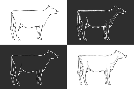Set of black and white engrave isolated  cow