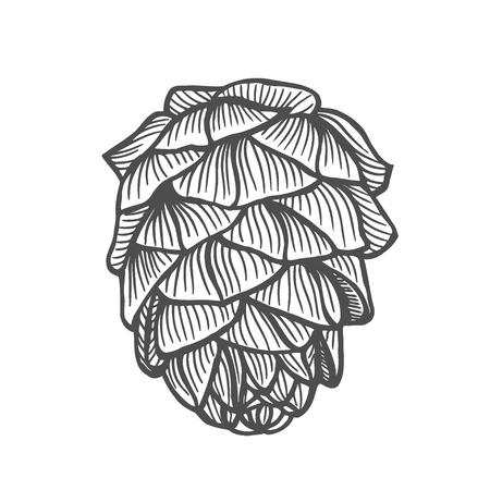 Hand drawn pine cone. Vintage vector illustration Vektorové ilustrace