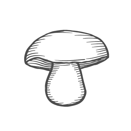 white fungus, engraving Hand drawn illustration