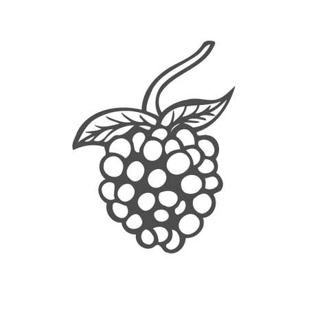 Raspberry fruit. Superfood organic berry. Hand drawn vector sketch engraved illustration. isolated on white background Illustration