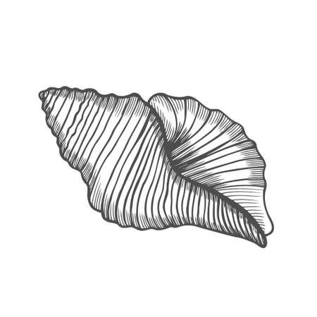 Nautilus de coquillage. Illustration vectorielle gravée de coquille de mer isolée sur fond blanc. Coquillage Doodle. Ornement de la vie marine Vecteurs