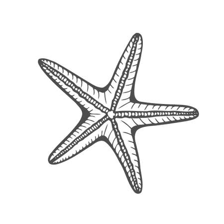 Hand drawn marine Starfish nature ocean aquatic underwater vector. Engraving illustration on white background