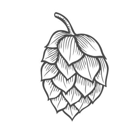 Hand drawn vector illustration of hops. Isolated on white background. Hand drawn vector illustration. Retro style.
