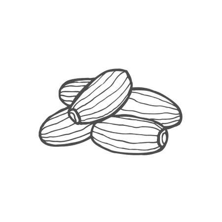 Dried fruits. Vector illustration of dates. Vector illustration 일러스트