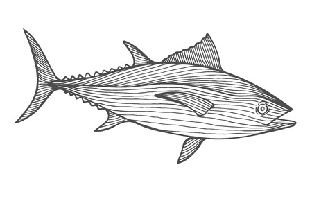 Ink sketch of tuna. Hand drawn vector illustration of fish isolated on white background. Retro style.