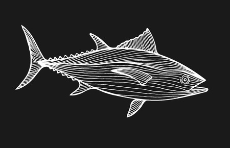 Ink sketch of tuna. Hand drawn vector illustration of fish isolated on black background. Retro style.