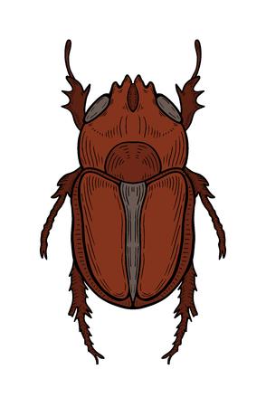 Brown big beetle illustration, drawing, engraving, ink, line art, vector