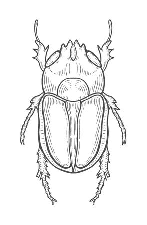 Ilustración de escarabajo grande, dibujo, grabado, tinta, arte lineal, vector