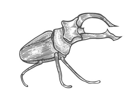 große Käferillustration, Zeichnung, Gravur, Tinte, Strichzeichnung, Vektor Isoliert auf Weiß