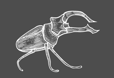 big beetle illustration, drawing, engraving, ink, line art, vector Isolated on black