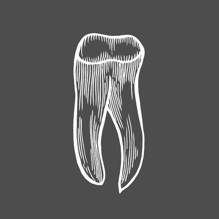 Vector engraving illustration of highly detailed hand drawn human tooth isolated on black background Illustration
