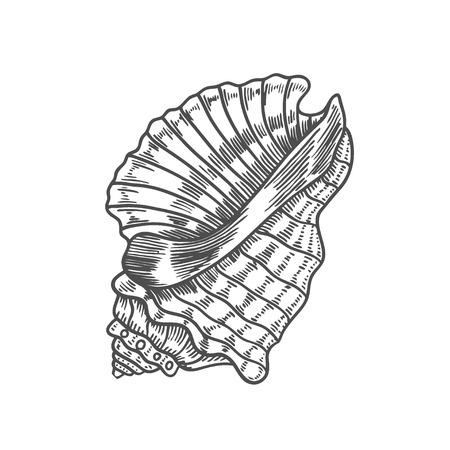 Vector ilustración de grabado antiguo de concha espiral aislado sobre fondo blanco.