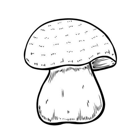 Hand drawn monochrome mushroom vector colorful sketch. Collection of different mushrooms with roots, real edible and poisonous boletus 版權商用圖片 - 126398320