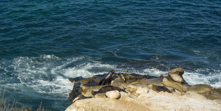 Sea Lions sun bathing on a rocky cliffside along the pacific coast. Reklamní fotografie