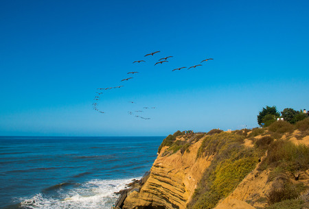 A flock a pelican soars over the Pacific Coast in California
