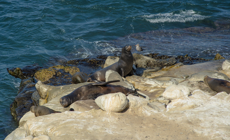 Sea Lions sun bathing on a rock.