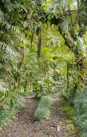 A maintained jungle trail through the mountains in Costa Rica
