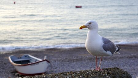 Sea gull on the seashore on the background of the boat is posing for the photographer.