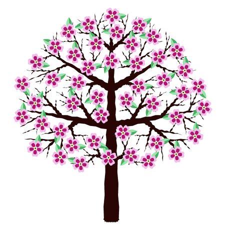 Blühende Kirschblüte isoliert auf weißem Hintergrund. Ein Baum mit Blumen. Kirschblüten, Vektorillustration.