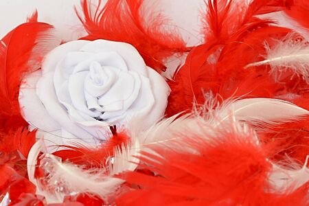 Red and white feathers with white rose Stock Photo - 13688775