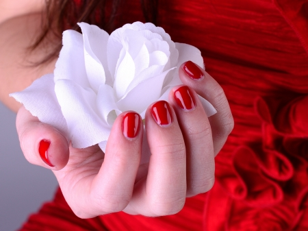 White rose in hand with red nail Stock Photo