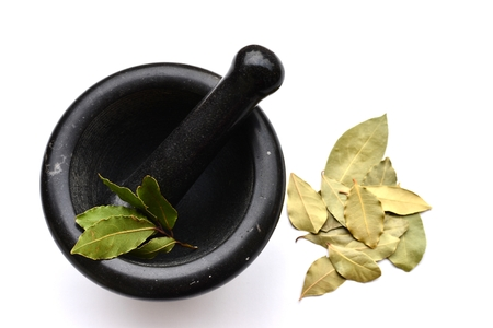 Fresh and Dry Bay Leaves