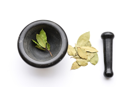 Fresh and Dry Bay Leaves and Mortal Stock Photo
