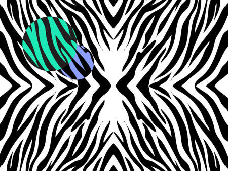 Vector illustration of zebra print on white background with colored spots. Black and white zebra print with colorfull spots.
