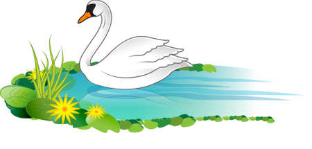 A vector illustration of a white swan swimming on a lake with lotus and flower around