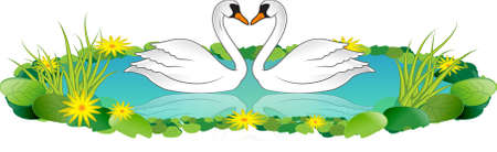 A vector illustration of 2 white swans on a lake with lotus and flowers around illustration